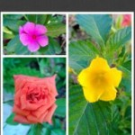 Crea collages fácilmente en Windows Phone con PhotoGrid